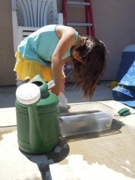 Dino wash 2